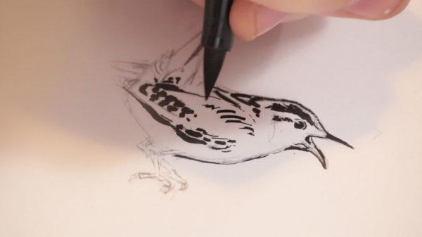 Brush Pen Drawing