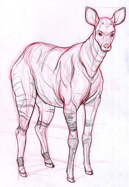 Colored Pencil illustration, Jordan McCracken-Foster
