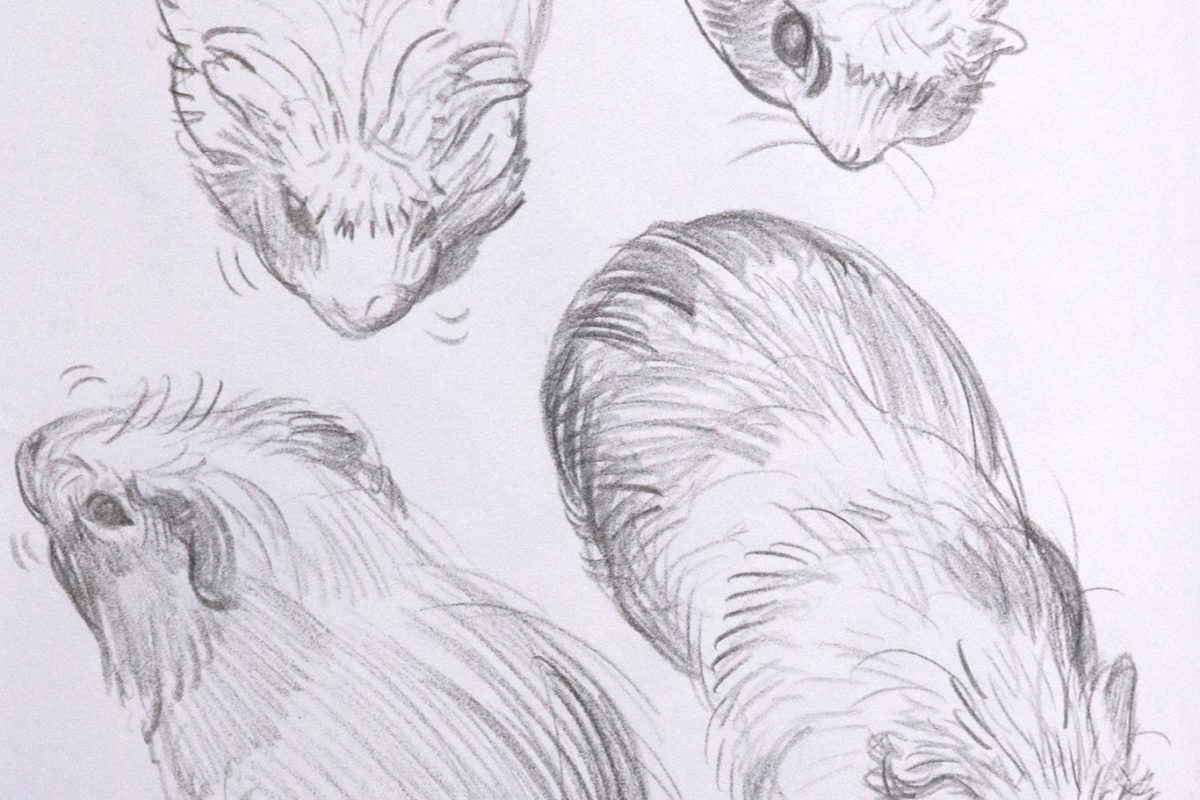 Creature Design Sketches, Julie Benbassat