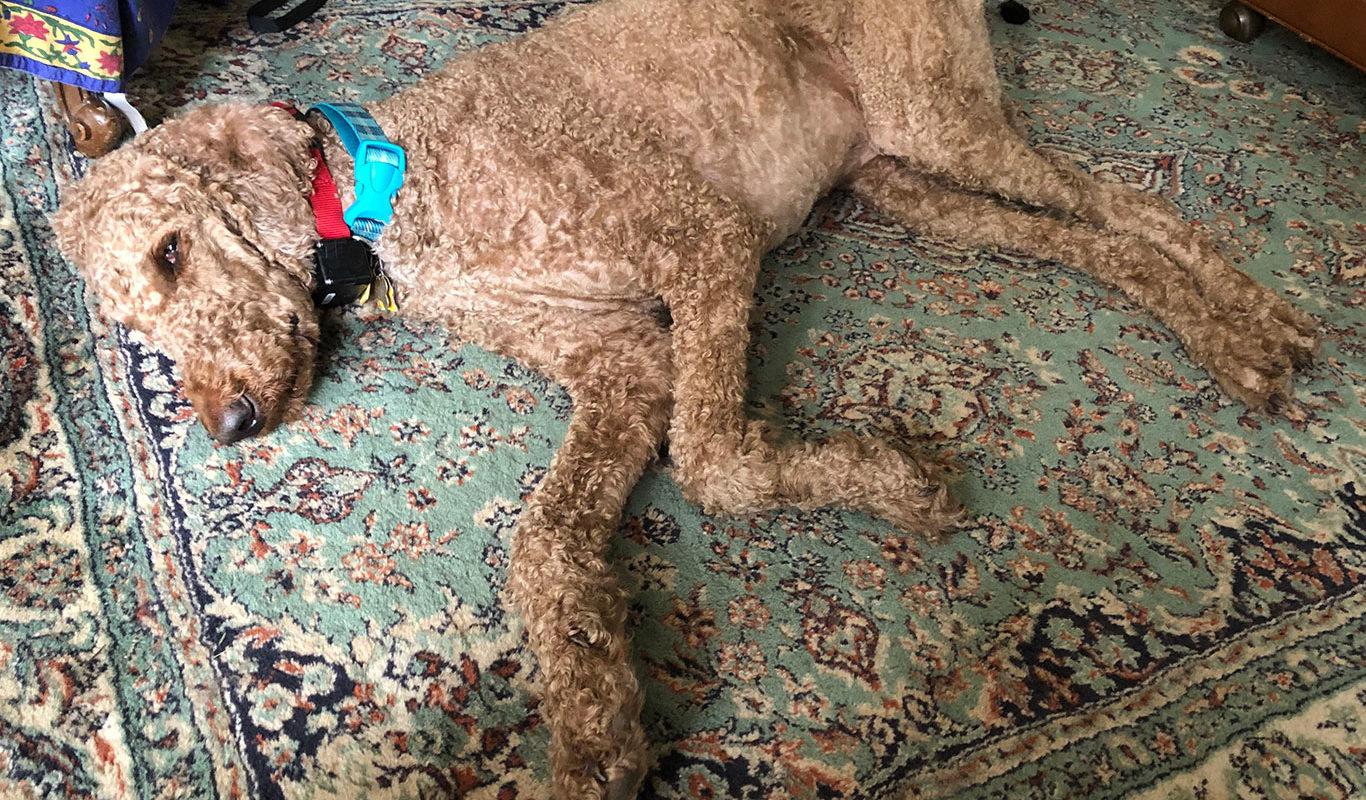 Eiligh's pet dog