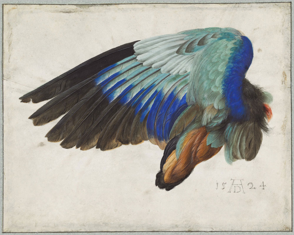 Albrecht Durer Left Wing of a Blue Roller, 1500