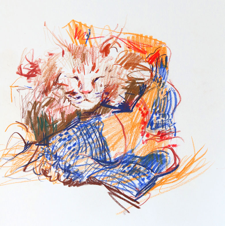 Cat Gesture Drawing, Colored Pencil, Clara Lieu