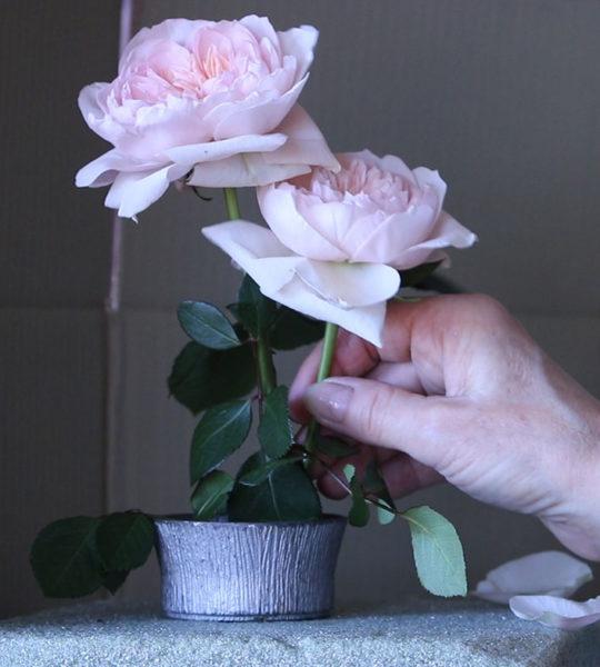 Kathleen Speranza, arranging roses