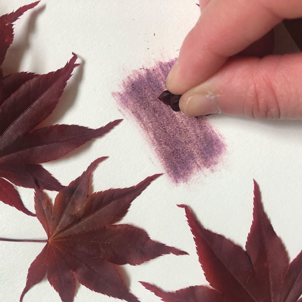 Home Art Supplies: Color with Japanese Maple Leaves