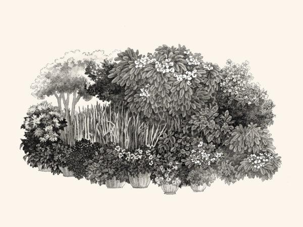 Margie's Garden, pen & ink drawing, Song Kang