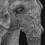 Art School Admissions Portfolio: Scratchboard Drawing