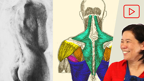 Anatomy for Artists: Upper Back Torso Muscles