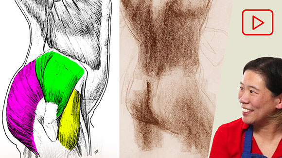 Anatomy for Artists: Butts