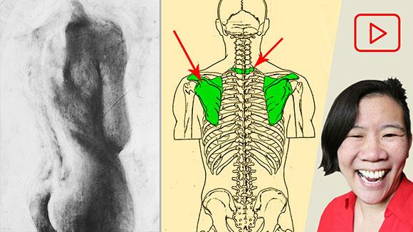 Drawing Tutorial: Female Back Torso